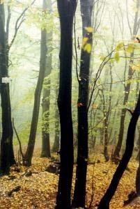 La for�t tch�que � l'automne. � Joshua Lurie-Terrell (hundertwasser@yahoo.com). Source en ligne : stock.xchng. Reproduction autoris�e par le site d'origine